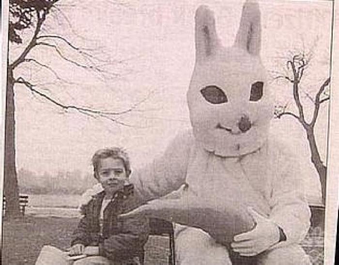 bunny 24