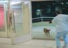 dog transplant