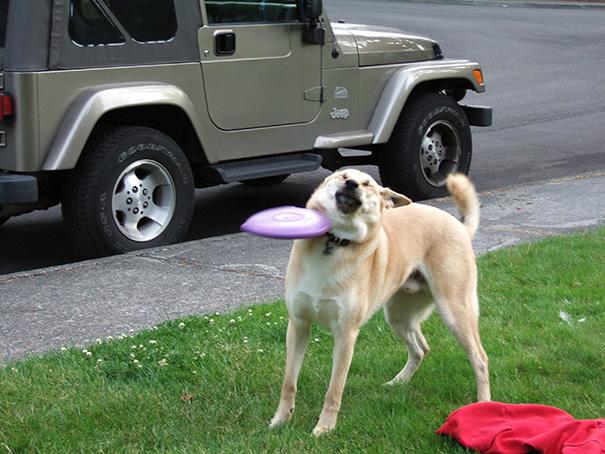 Dog Mistakes