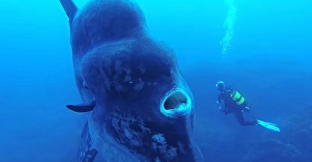 Meet The Underwater Creature Big Enough To Inhale An