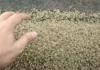 tiny crabs thumb