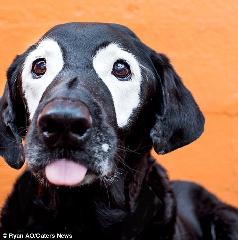 dog with skin condition 3