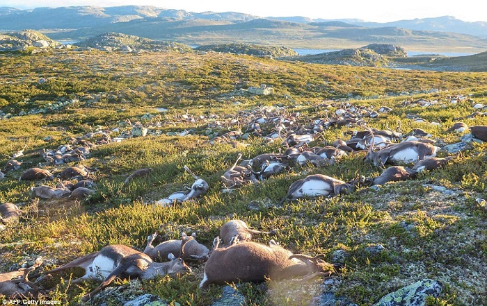 dead deers 1