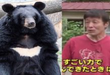 Japanese man fights bear 1