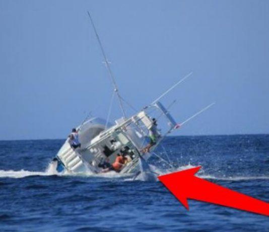 Marlin Topples Boat